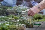 コロンビアの病院が患者を薬用植物で治療